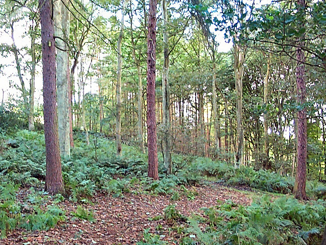 Heber's Ghyll woods