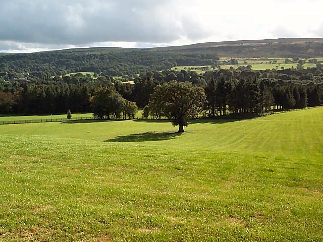 Parkland at Rhyddings Lathe