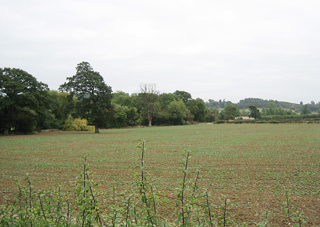 Fields near Mickleton