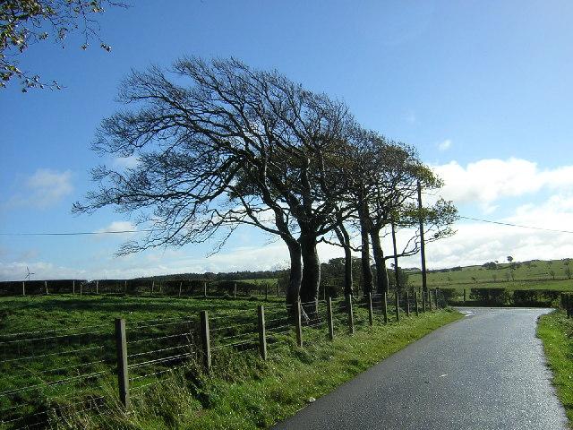 Wind Swept Trees Near East Kilbride