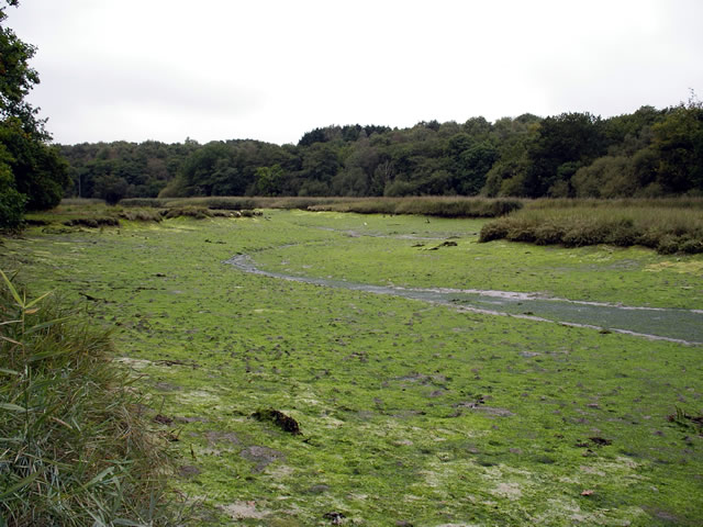 Badnam Creek, River Hamble