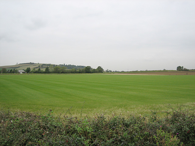 Field of Turf
