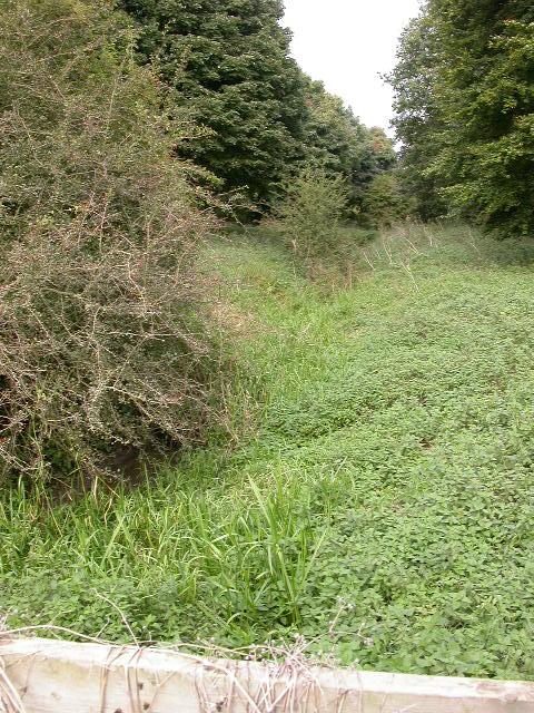 Brook near Pitsford Water