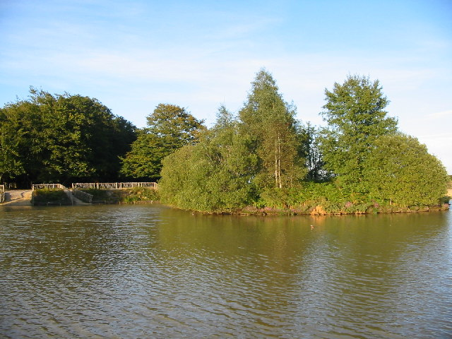 Cadmans Pool, New Forest.