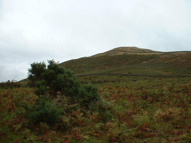 Knott Hill