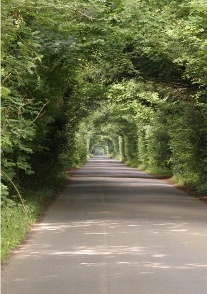 Near Cholderton Lodge
