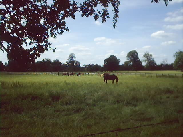 Horses grazing in Berkshire