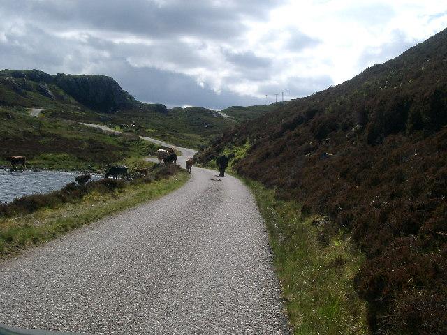 Beasts, near Loch nam Brac, Sutherland