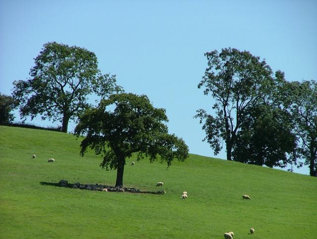 Hollaway Hill