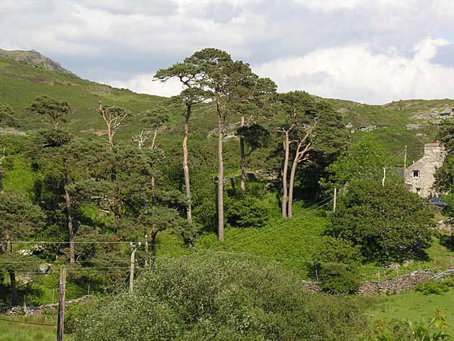 View from Tyddyn-engan