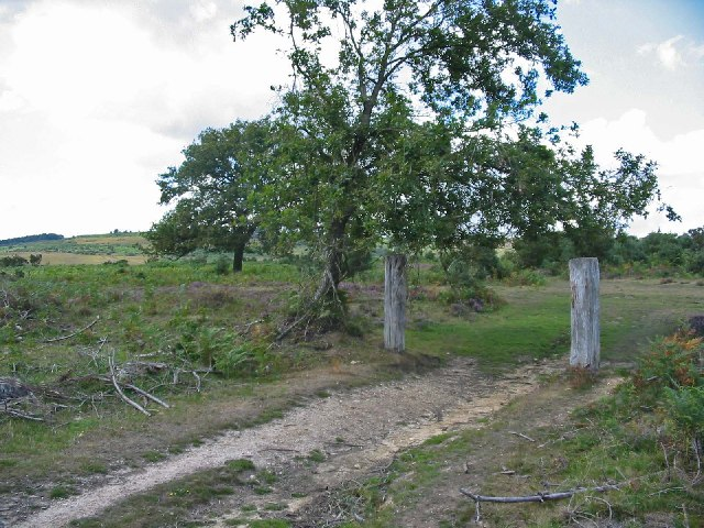 Old inclosure boundary at Must Thorns Bottom, New Forest.
