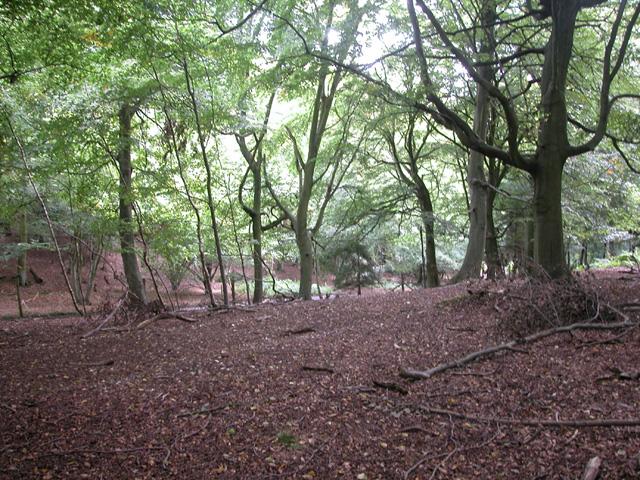 Rowe Wood