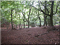 SU7685 : Rowe Wood by Dennis Turner