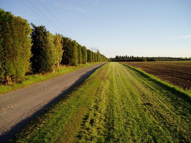 Lane to Westbourn Farm