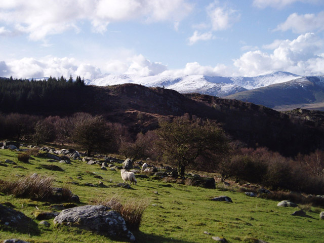 Grazing above Rhos farm, Capel Curig