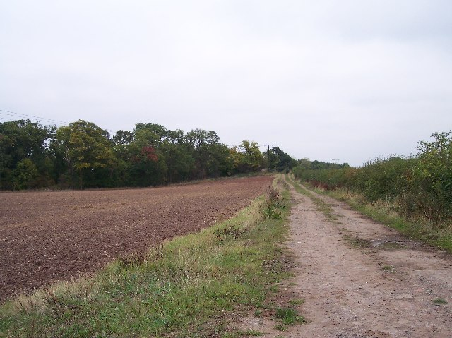 Track to Baggetts Coppice