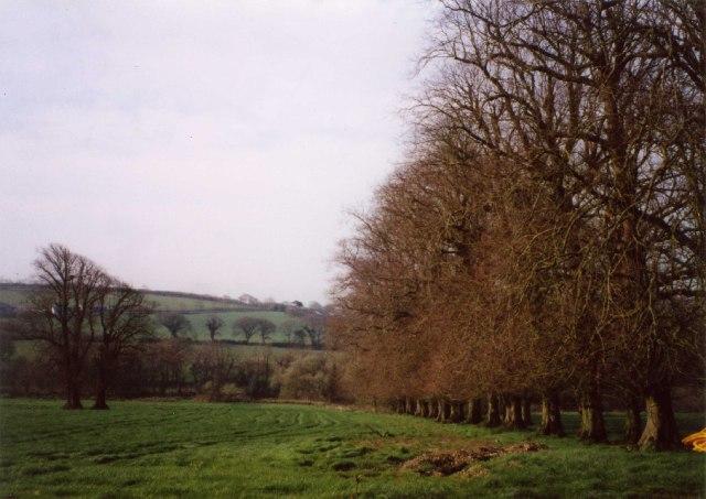 Line of trees behind Tremeere Manor, Lanivet