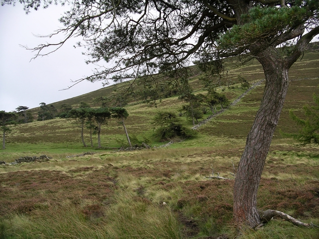 Pine Trees, Tinto Hill