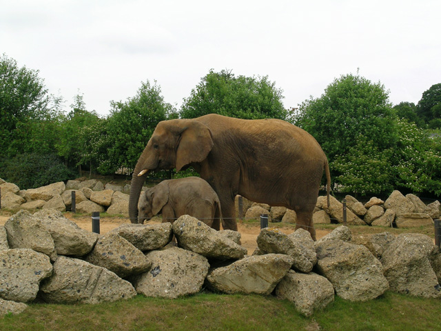 Elephant enclosure at Colchester Zoo