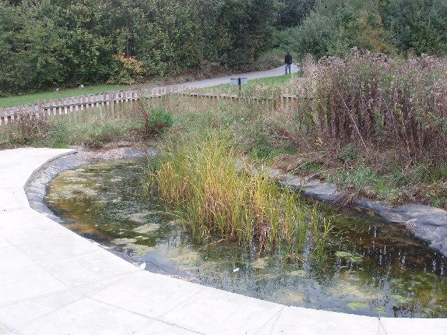 Pond at Welsh Harp Environmental Education Centre