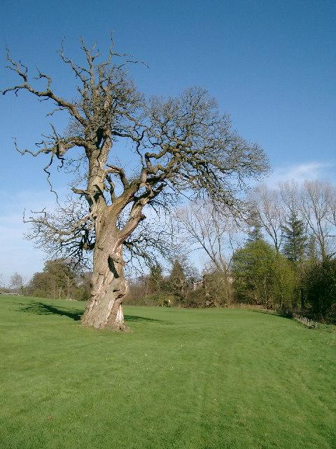 Dead Tree, Hoddom