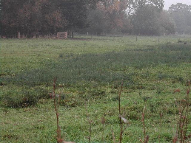 Marsh Land alongside The Beck