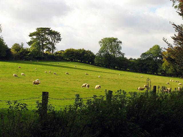 Pasture at Netherton