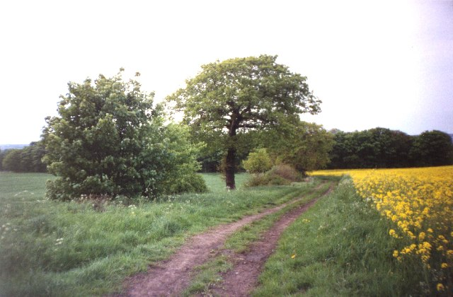 Path from Paradise to Lady Wood, Thornhill