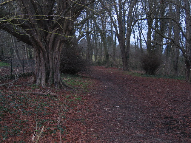 Woods north of Chalfont St Giles