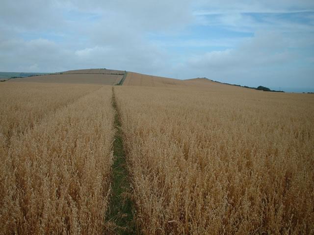 Farmland east of Niton