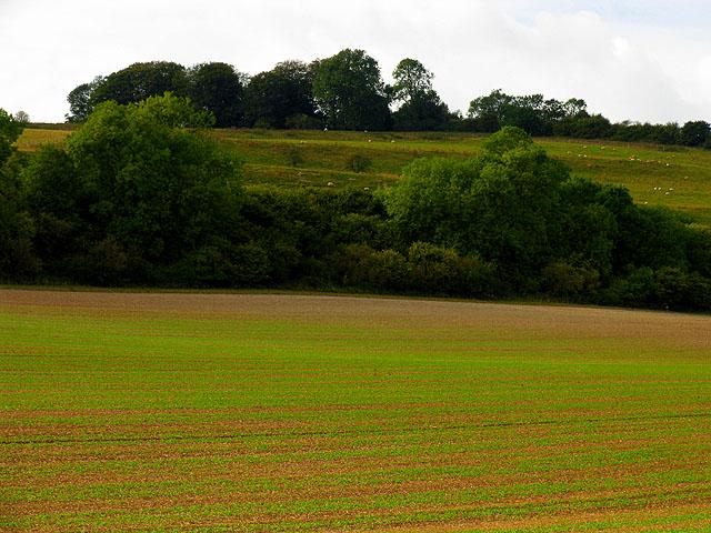 Newly Planted Field near Linkenholt
