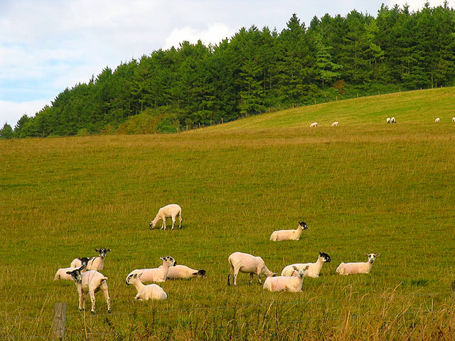 Pasture at Combe Bottom