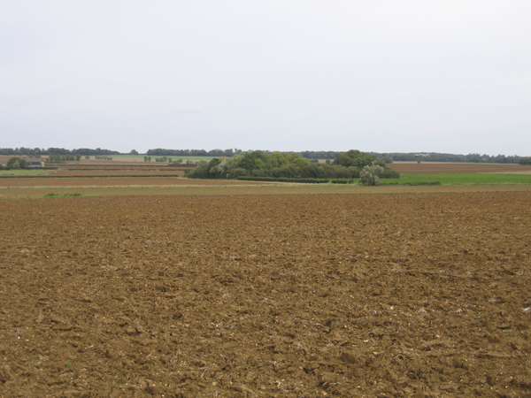 View towards Manor Farm, Wrestlingworth, Beds