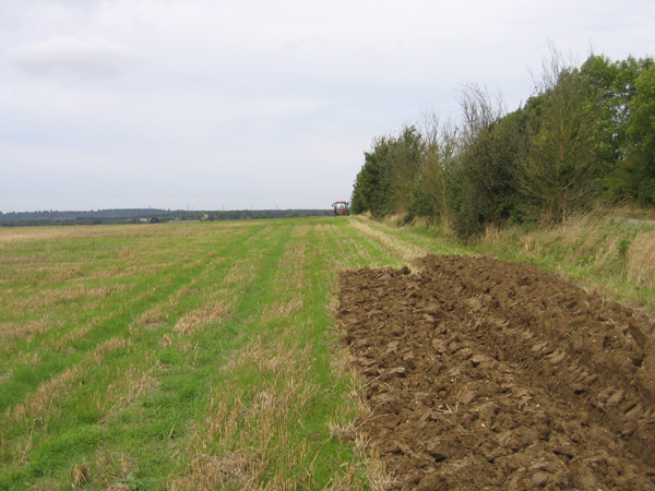 Farmland SE of Sutton, Beds