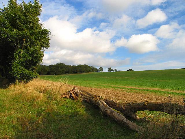 Farmland near Faccombe