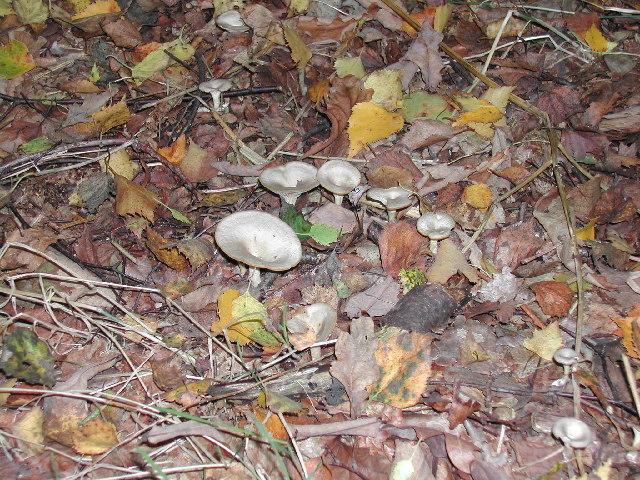 Fungi, Sherwood Forest