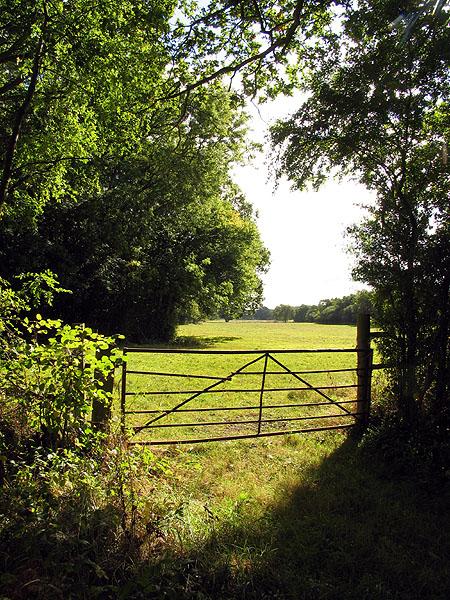 Field near Milkhouse Copse