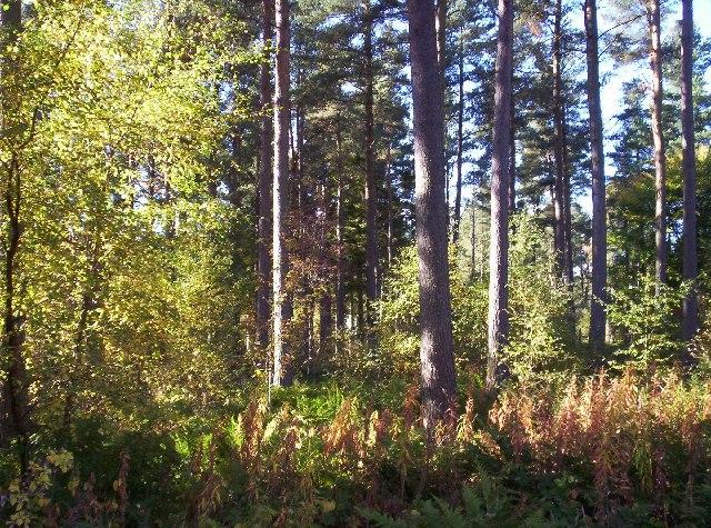 Inglismaldie Woods