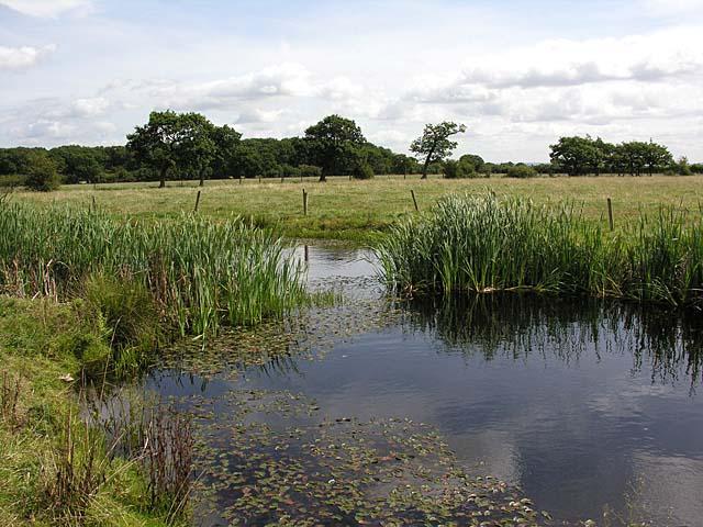 Pond near Rosalie Farm