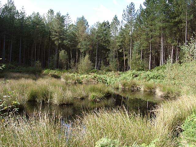 Pool in Delamere Forest