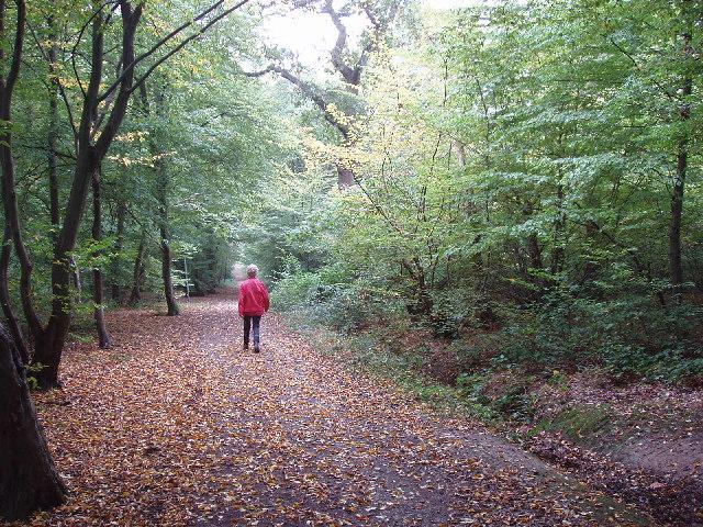 Hillingdon Trail in Mad Bess Wood, Ruislip
