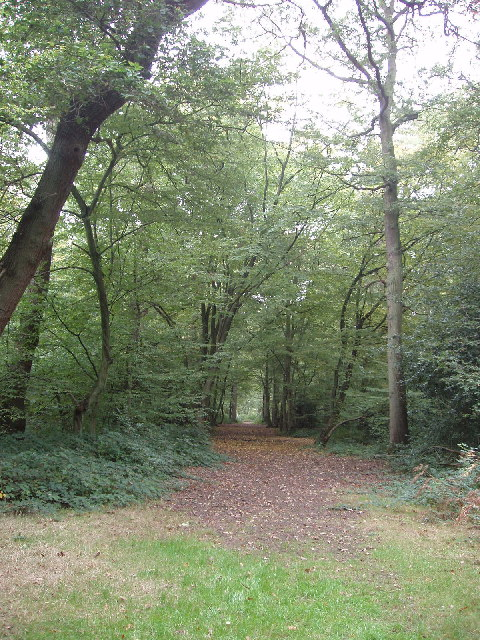 Mature trees in Bayhurst Wood Country Park