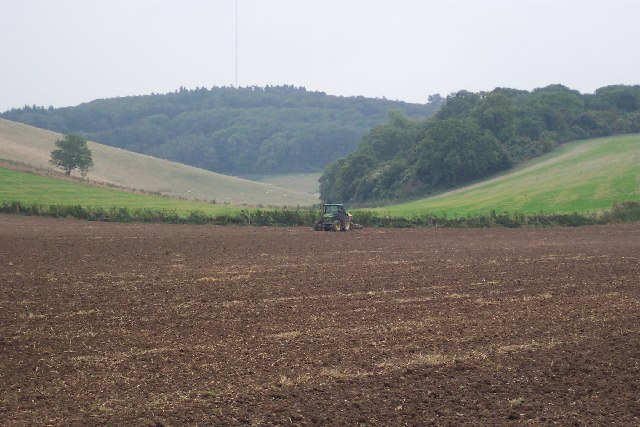 Sowing the winter wheat