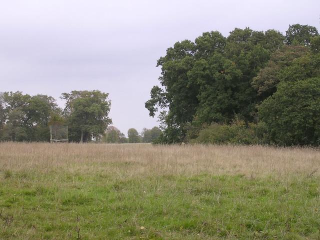 Edge of Roydon Woods and Brockenhurst Park, New Forest
