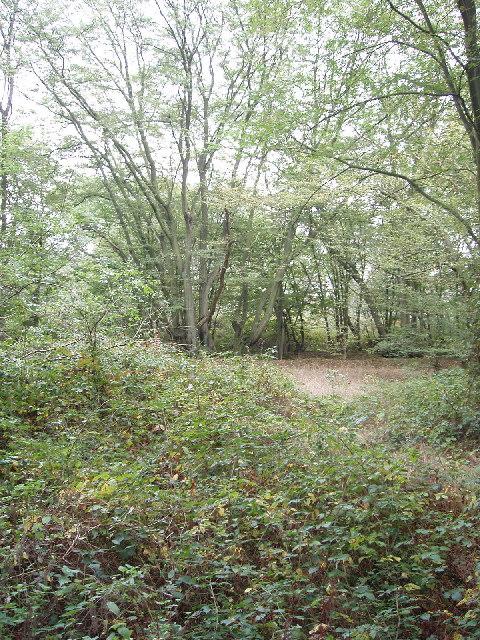 Edge of Bayhurst Wood