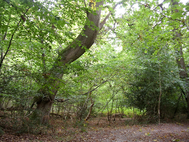 Roydon Woods, south of Brockenhurst Park, New Forest