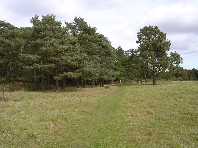 Southern edge of Roydon Woods, Sandy Down, New Forest