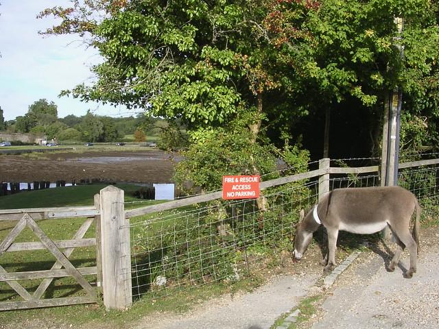 Grazing donkey near Beaulieu Fire Station, New Forest