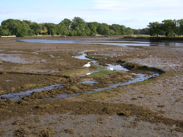 The Beaulieu River at low tide, New Forest
