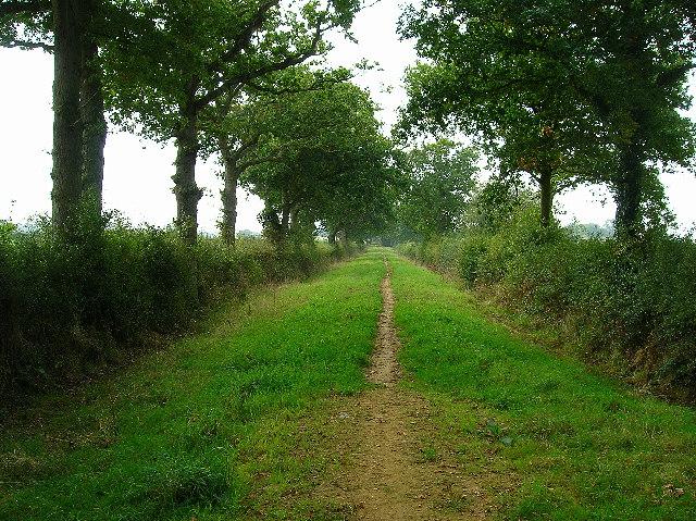 Old lane near Chalvington